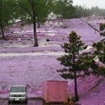 北海道旅2009春3
