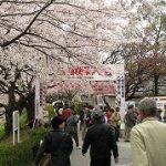 京都の桜2
