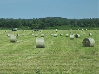 牧草ロール1
