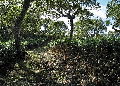 藻琴山登山11