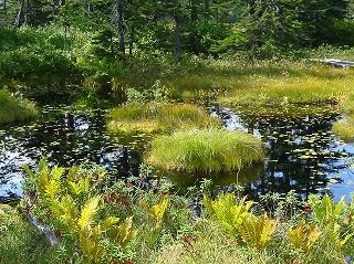 浮島湿原1