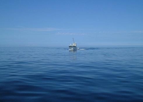 知床自然観察船8