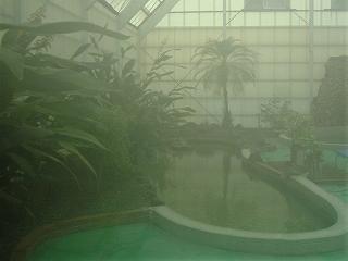 ジャングル風呂1